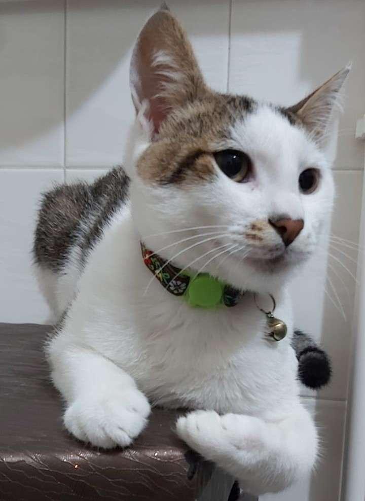 Ponçik Adlı Kedimiz Kayboldu