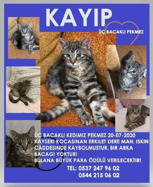 Kayıp üçbacaklı kedi Kayseri