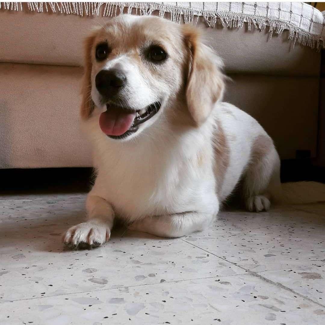 Kayıp köpeğim