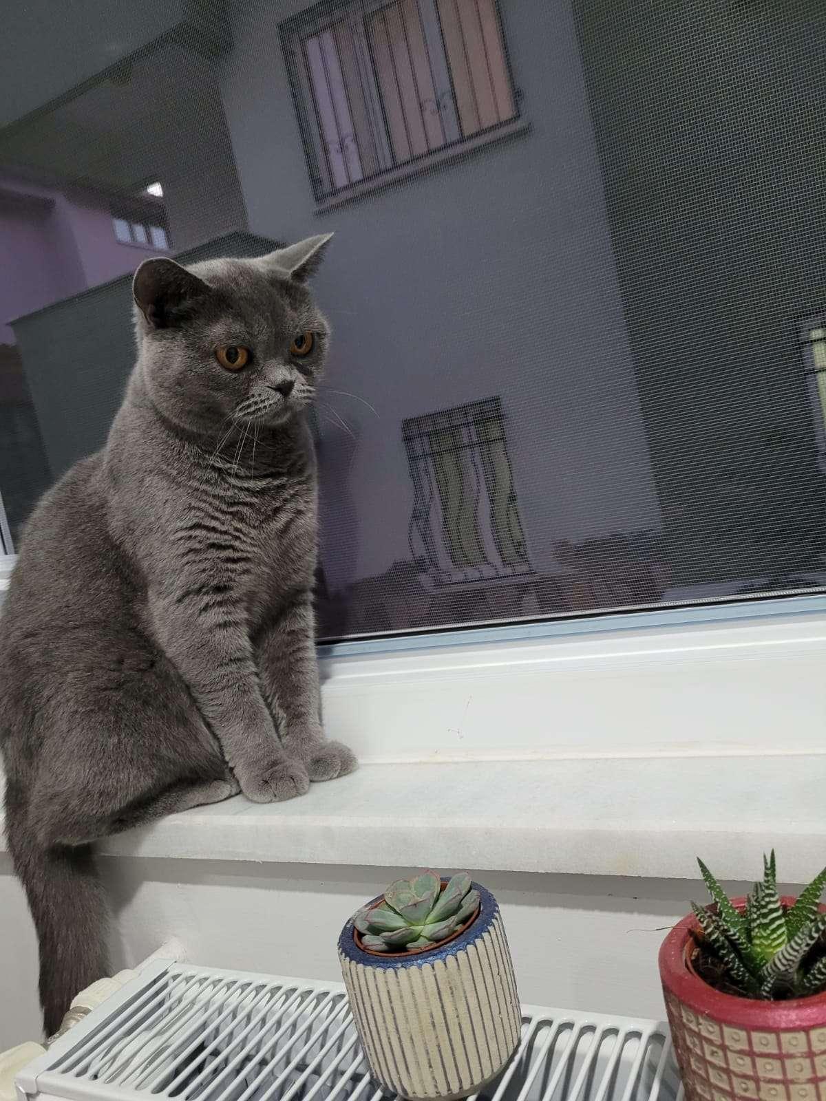 Acil Kayıp Kedi