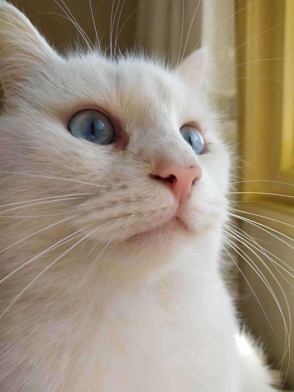 Kedim Beyazıt Kayıp