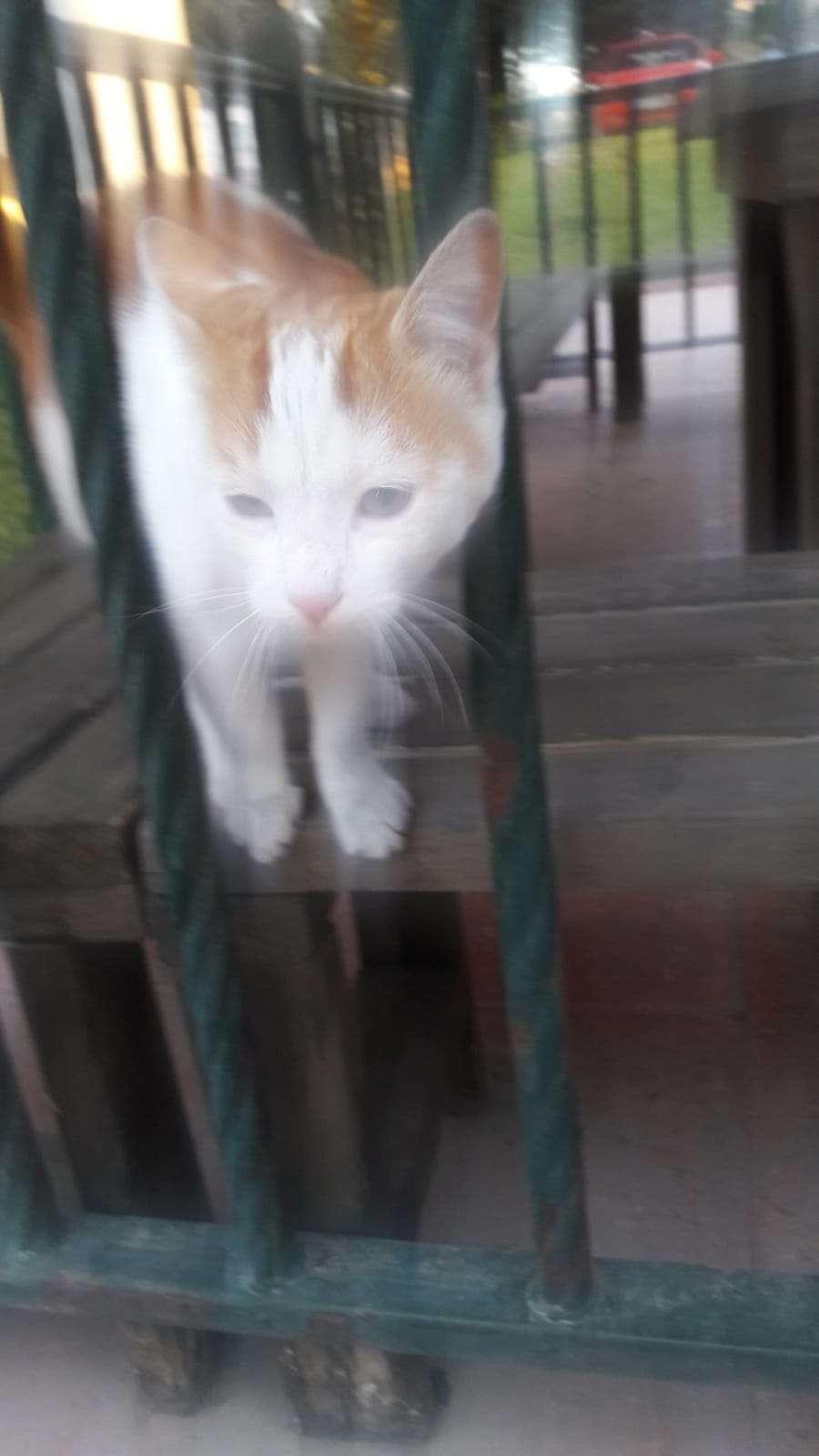eryamanda bulunmuştur kayıp kedi