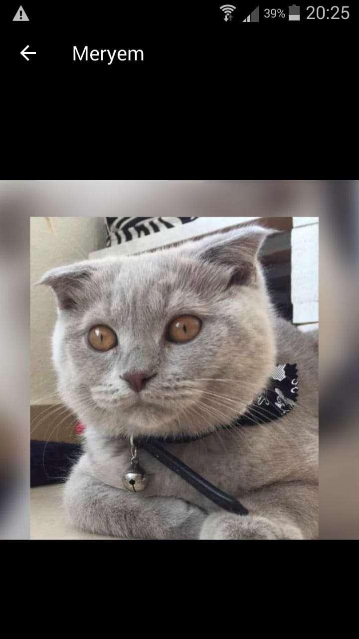 Paşa isimli kedim kayıptır