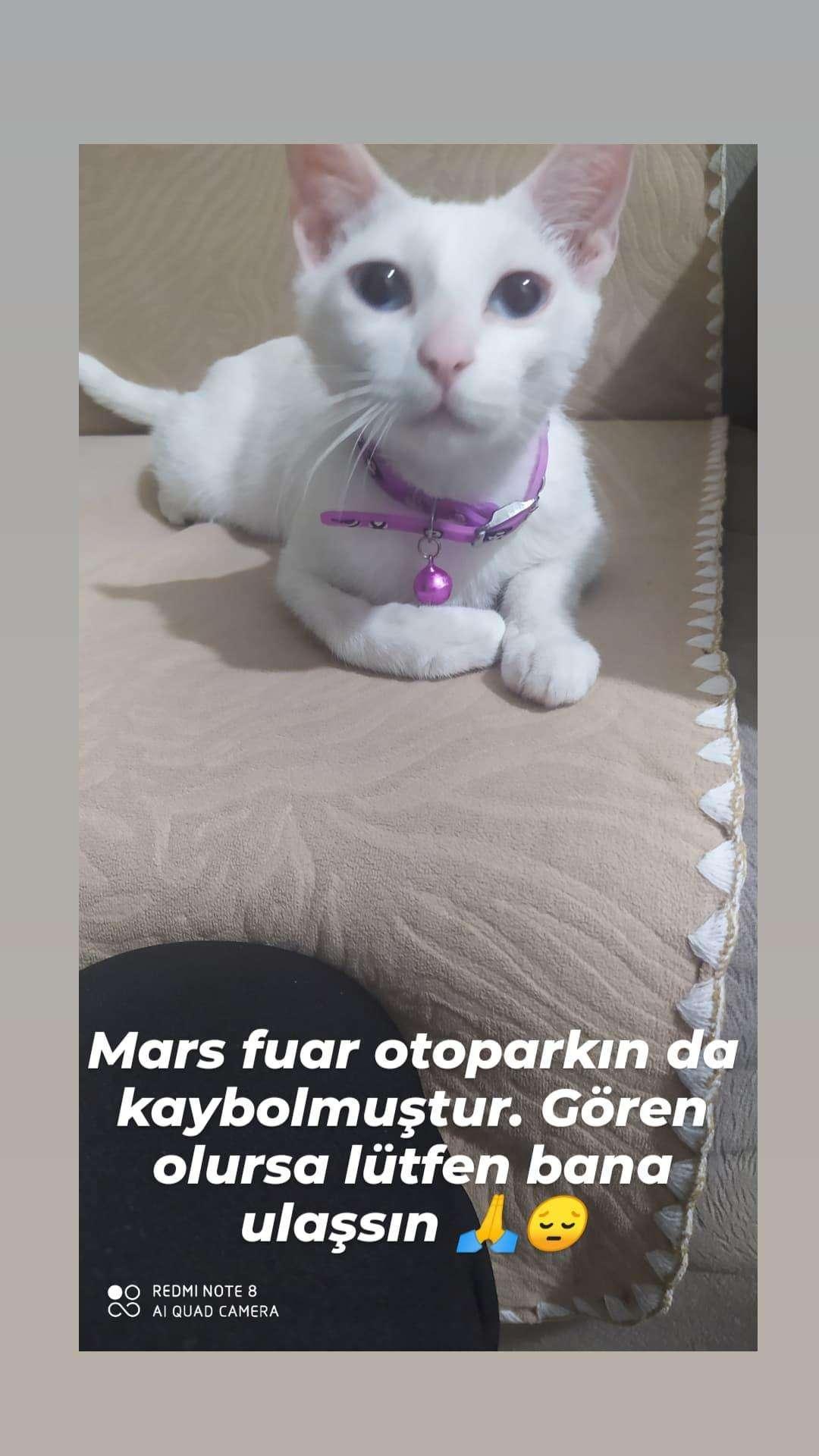 Kedim mars kayboldu