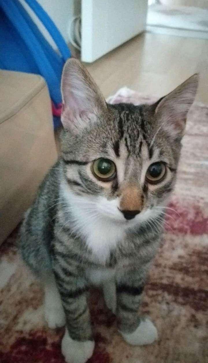 Kayıp kedi Mıstık