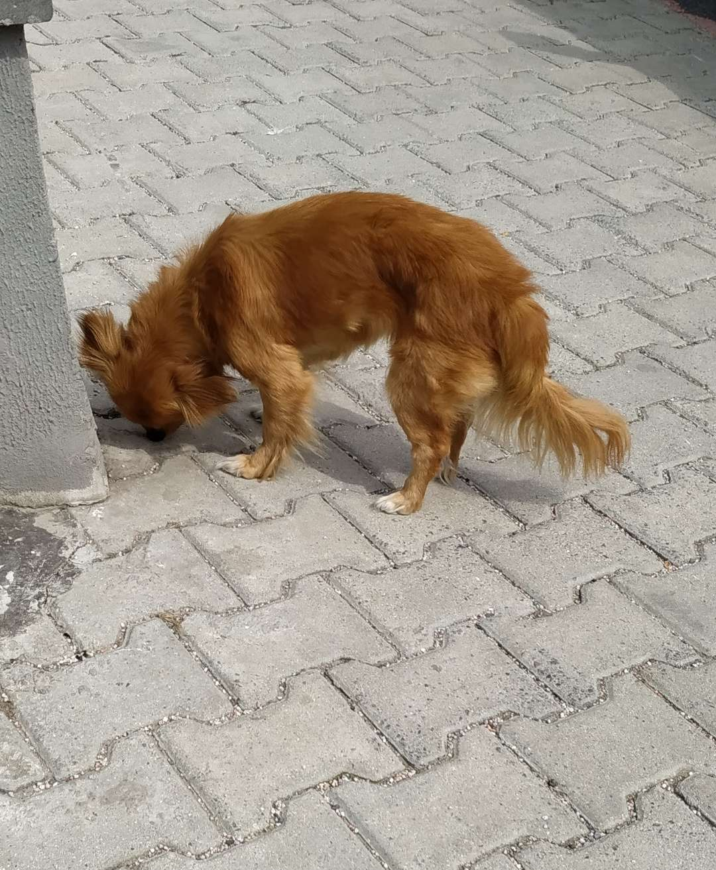 Köpek görüldü