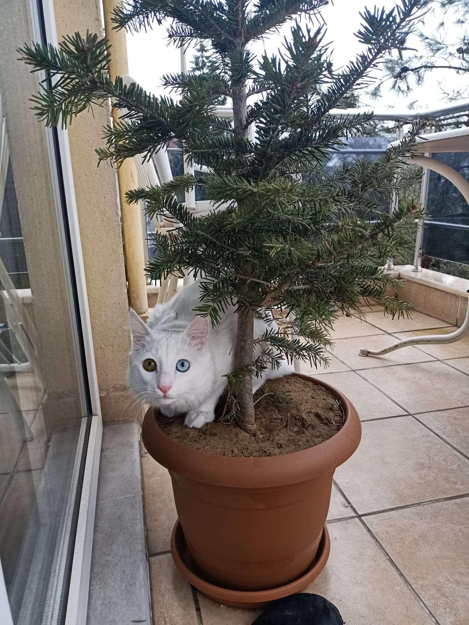 Kedim pati kayboldu