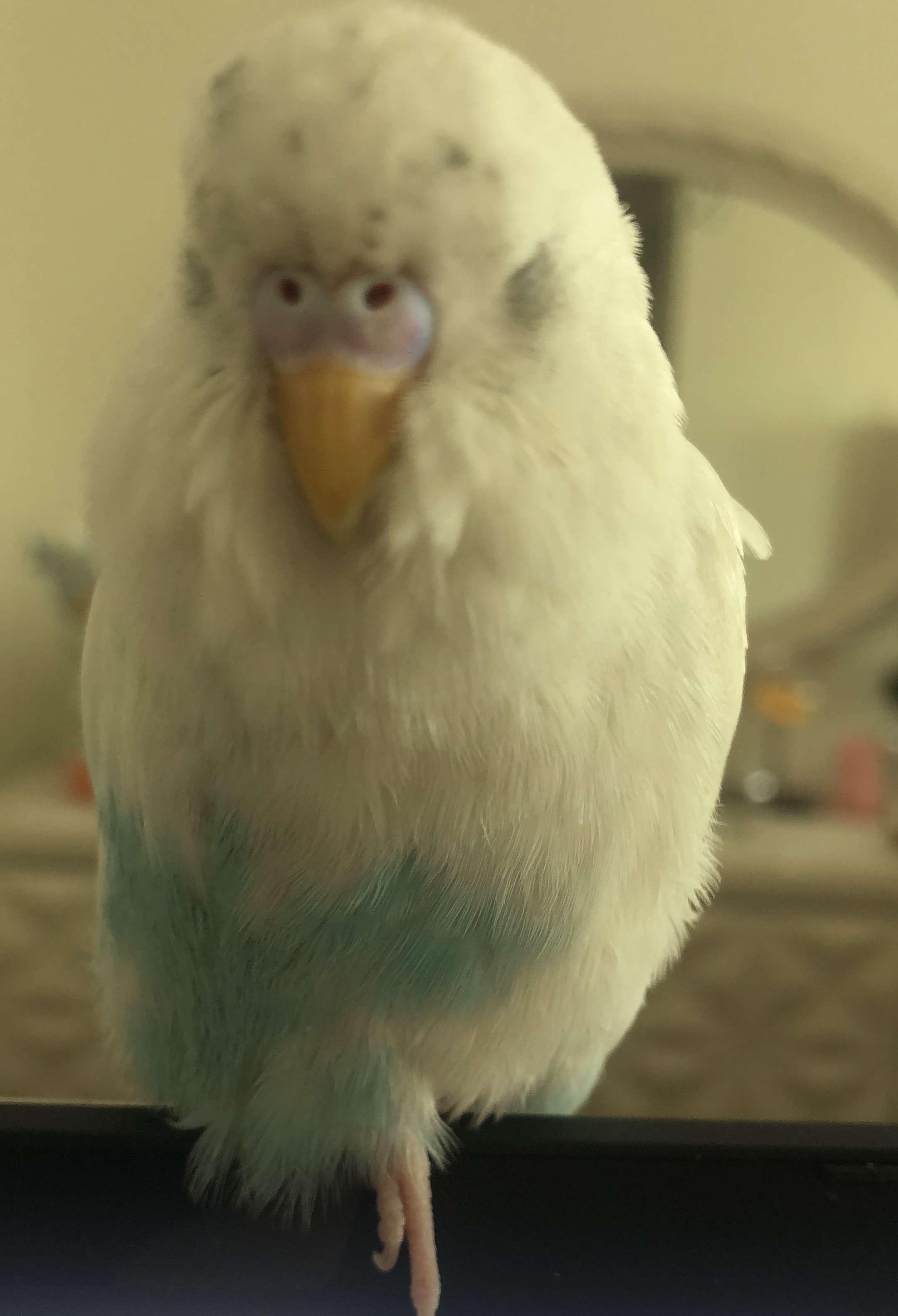 Trendist Ataşehir Civarı Kayıp Kuş