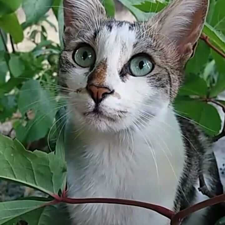 Malatya kayıp kedi