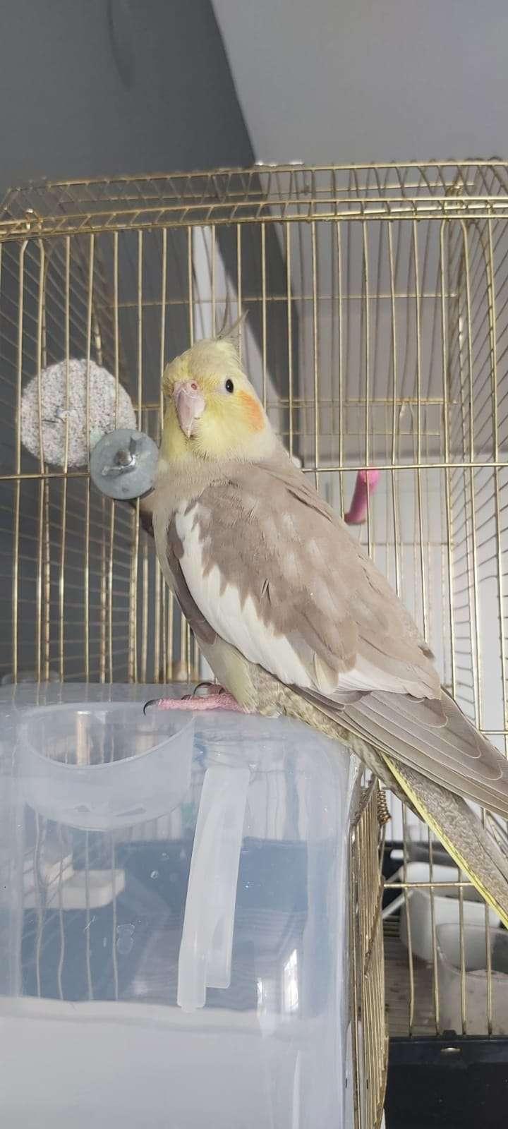 Kayıp Sultan Papağanı