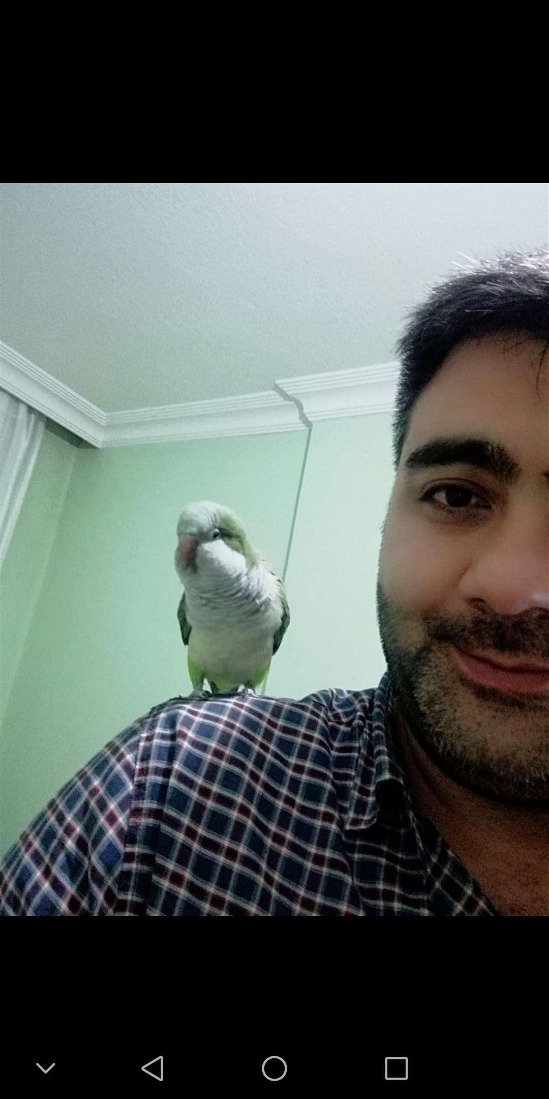 Monk papağan kayıp