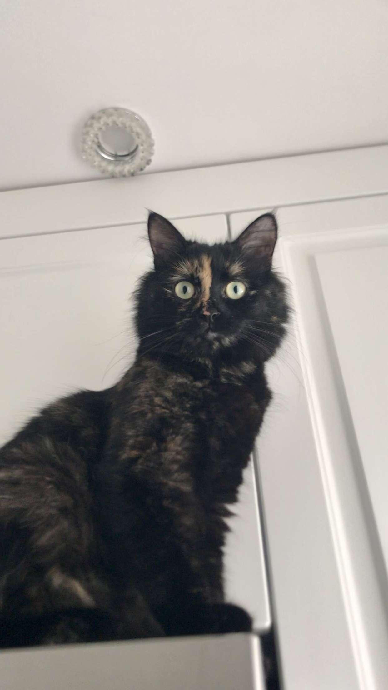 Kedim Kayıp Atakent/Ümraniye