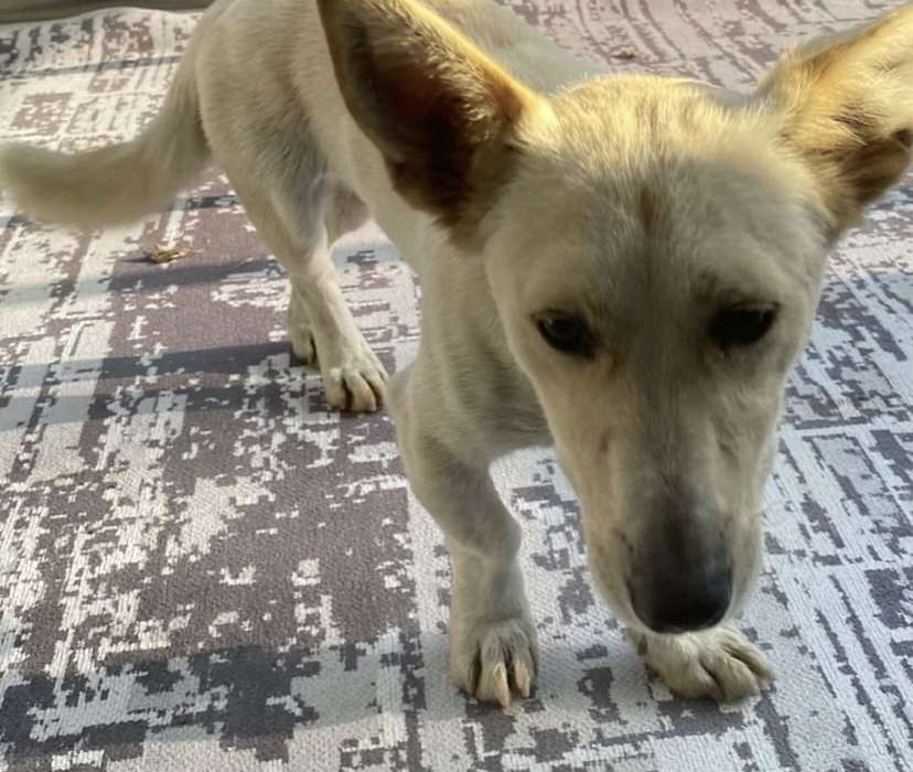 Tuzla kayıp köpek