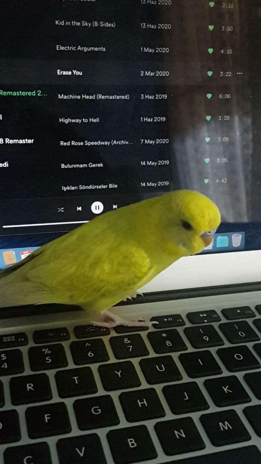 Kuşum Kaçtı