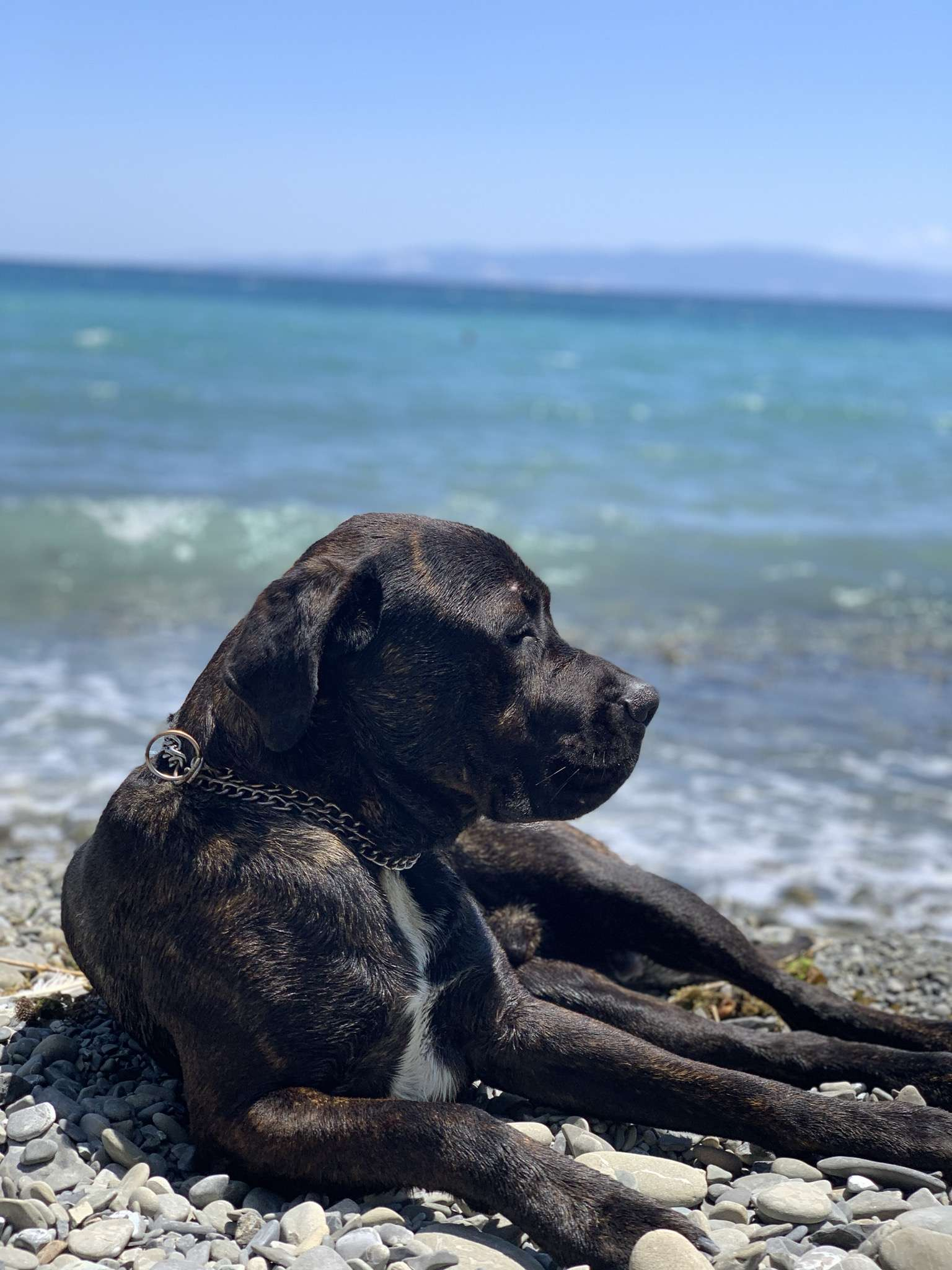 Esenyurt Kayıp Köpek