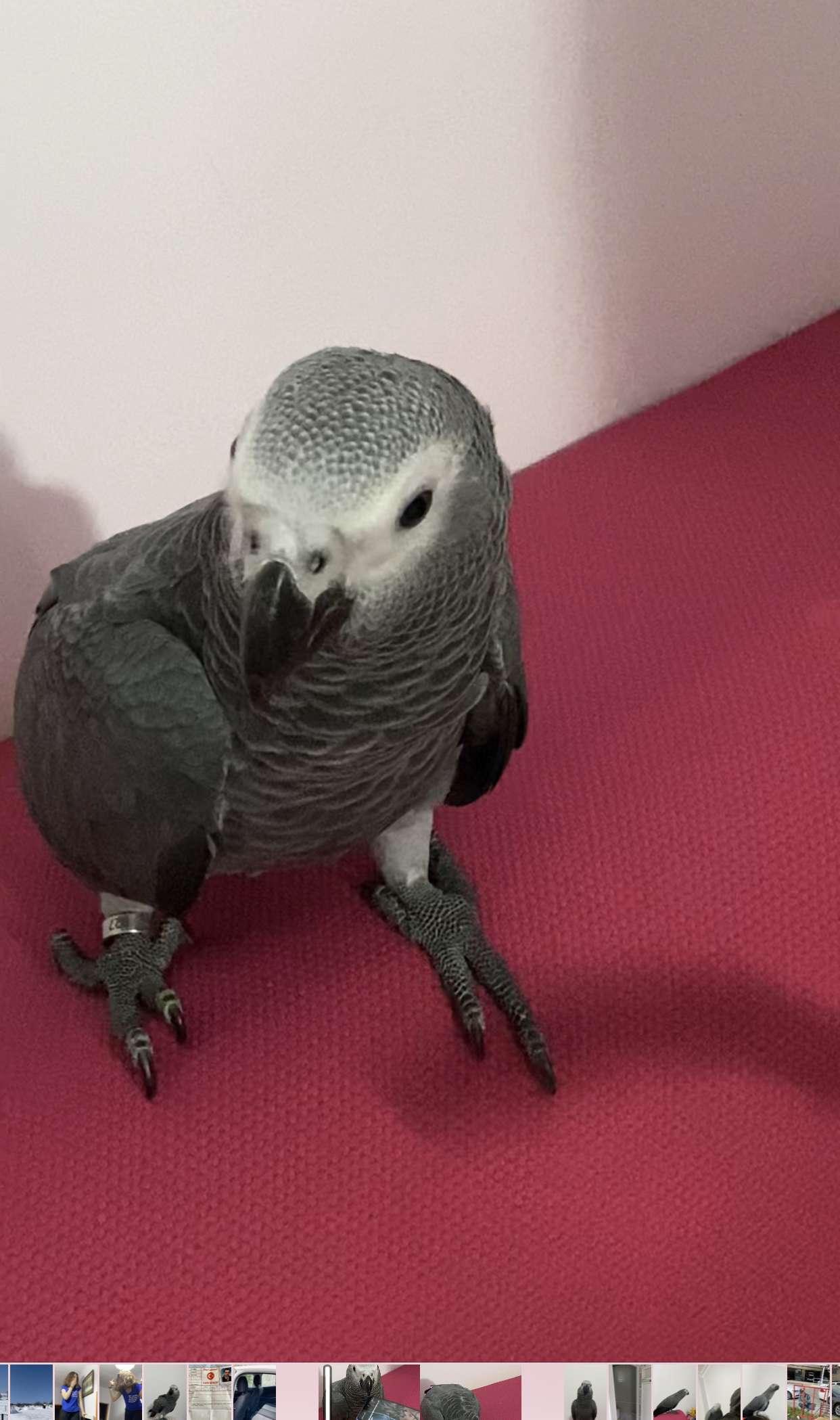 Jako papağanım kayboldu ödüllü