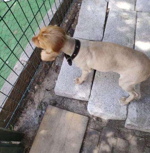 köpeğim kapıp