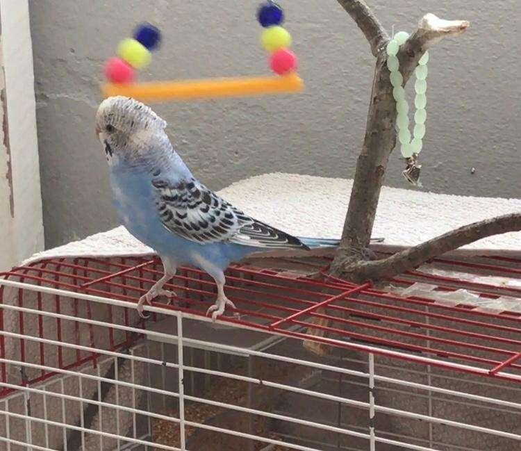 Kuşum kayıp