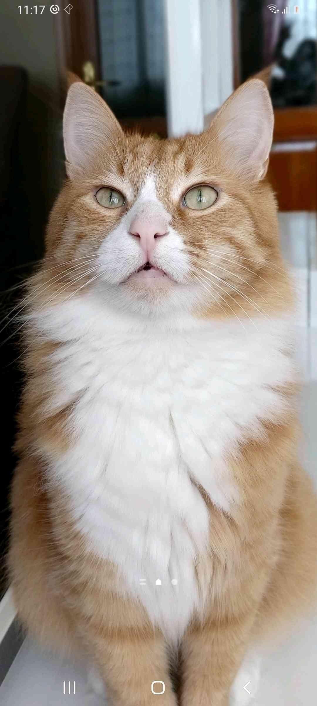 Bahçelievler badem kedi